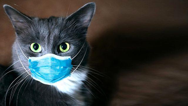 Koronavirüs salgınının başladığı Vuhan'dan uyarı geldi: Kedilerde hastalığa yakalanma oranı yüksek
