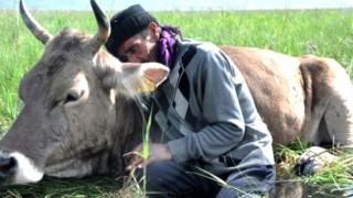 Bataklığa saplanan ineğinin başında sabahlayan Mehmet Amca bu bayram çok mutlu