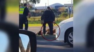 Polisin kafasını tekme attığı Avustralyalı yoğun bakımda
